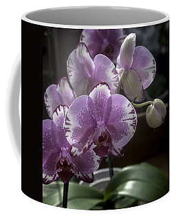 Variegated Fuscia And White Orchid Coffee Mug