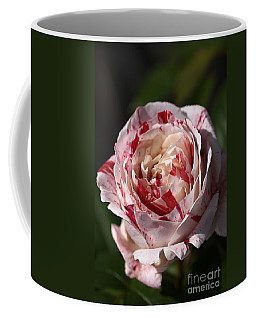 Coffee Mug featuring the photograph Variegated Rose by Joy Watson