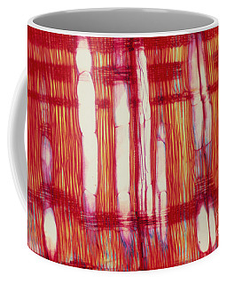 Vascular Rays And Vessel Elements Coffee Mug