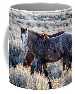 Velvet - Young Colt In Sand Wash Basin Coffee Mug by Nadja Rider