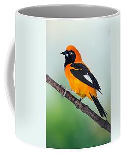 Venezuelan Troupial Icterus Icterus Coffee Mug