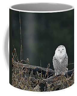 Vermont Snowy Owl Coffee Mug