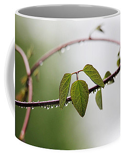 Coffee Mug featuring the photograph Vine With Raindrops by Trina  Ansel