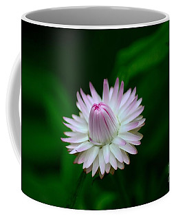 Violet And White Flower Sepals And Bud Coffee Mug