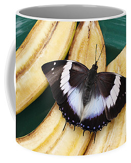 Violet-spotted Charaxes Butterfly Coffee Mug
