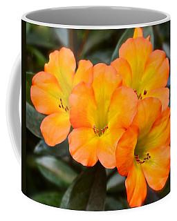 Vireya Rhododendron Coffee Mug by Venetia Featherstone-Witty