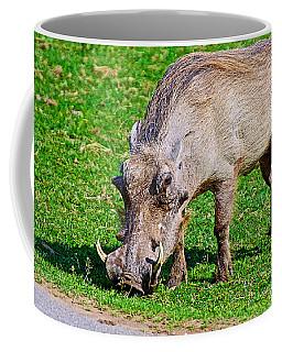 Warthog In Addo Elephant Park Near Port Elizabeth-south Africa  Coffee Mug