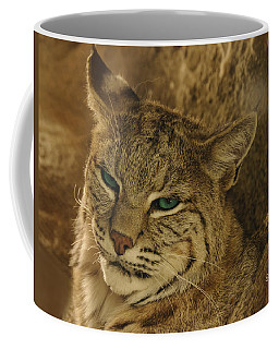 Wary Bobcat Coffee Mug