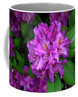 Washington Coastal Rhododendron Coffee Mug