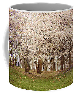 Coffee Mug featuring the photograph Washington Dc Cherry Blossoms by Kim Hojnacki