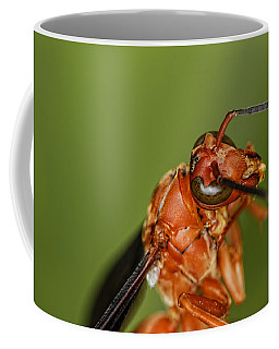 Wasp 1 Coffee Mug