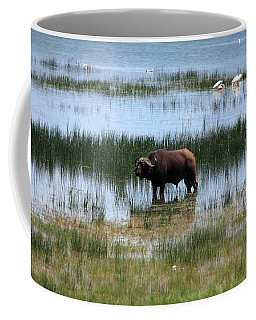 Water Buffalo At Lake Nakuru Coffee Mug