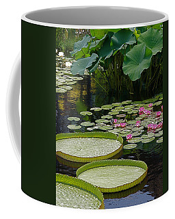 Coffee Mug featuring the photograph Water Lilies And Platters And Lotus Leaves by Byron Varvarigos