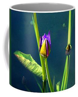Water Lily 005 Coffee Mug