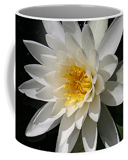 Coffee Mug featuring the photograph Water Lily  by Denyse Duhaime