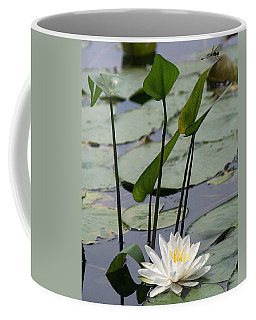 Water Lily In Bloom Coffee Mug