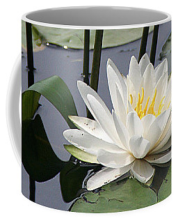 Coffee Mug featuring the photograph Water Lily In Bloom by William Selander