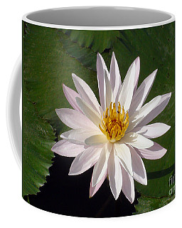 Coffee Mug featuring the photograph Water Lily by Sergey Lukashin