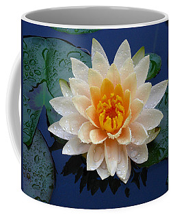 Waterlily After A Shower Coffee Mug