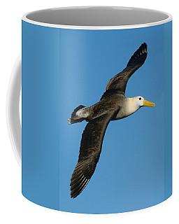 Waved Albatross Diomedea Irrorata Coffee Mug