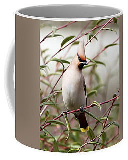 Waxwing Coffee Mug