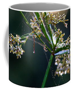 Coffee Mug featuring the photograph Web After The Rain by Adria Trail