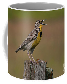 Western Meadowlark.. Coffee Mug