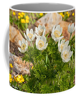 Western Pasqueflower And Buttercups Blooming In A Meadow Coffee Mug by Jeff Goulden