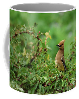 What? Coffee Mug by Kenny Glotfelty