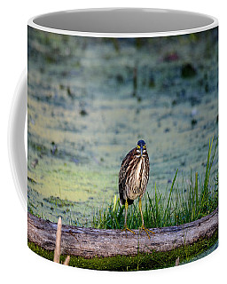 Coffee Mug featuring the photograph Whatcou Lookin' At? by David Porteus