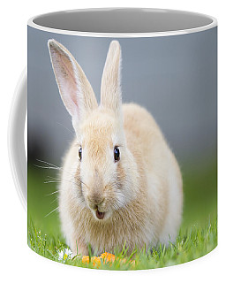 What's Up Doc Coffee Mug