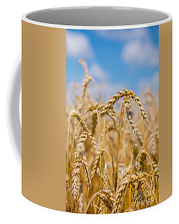 Wheat Coffee Mug by Cheryl Baxter