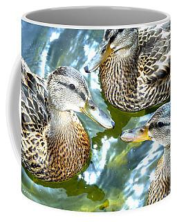 When Duck Bills Meet Coffee Mug