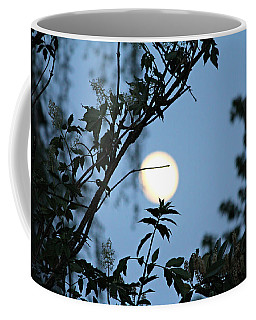 Where Are The Fairies Coffee Mug by Jeanette C Landstrom