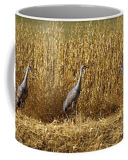 Where Is The Corn Coffee Mug