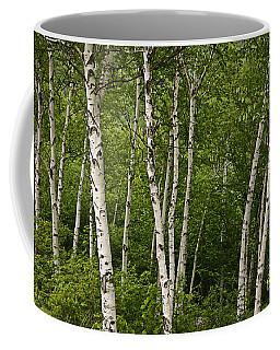 White Birch Coffee Mug