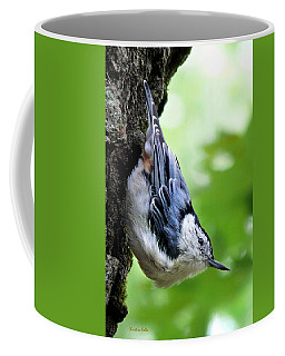 White Breasted Nuthatch Coffee Mug by Christina Rollo