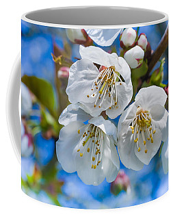 White Cherry Blossoms Blooming In The Springtime Coffee Mug