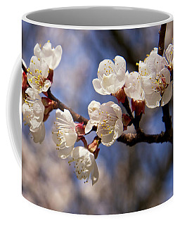 Coffee Mug featuring the photograph White Cherry Blossoms by Mary Lee Dereske