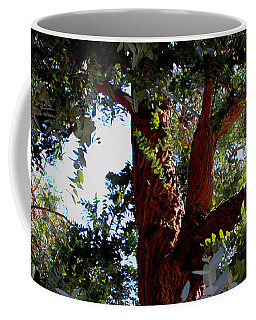 Coffee Mug featuring the photograph White Eucalyptus 2 by Jennifer Muller