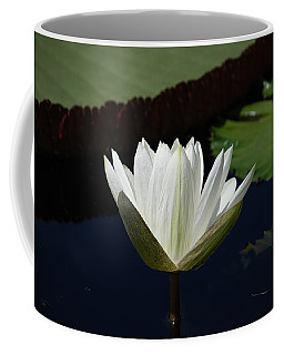 Coffee Mug featuring the photograph White Flower Growing Out Of Lily Pond by Jennifer Ancker