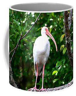 Coffee Mug featuring the photograph White Ibis by Debra Forand
