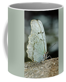 Coffee Mug featuring the photograph White Morpho by Tam Ryan
