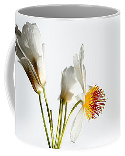 White Sparmannia Africana Plant. Coffee Mug