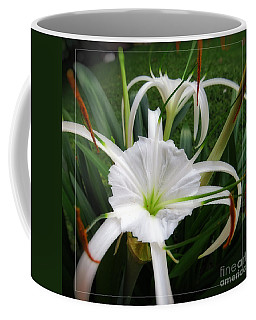 Hurricane Lily Photographs Coffee Mugs