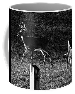 White Tailed Deer Coffee Mug