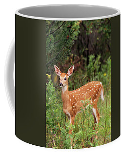 White-tailed Deer Fawn Odocoileus Coffee Mug
