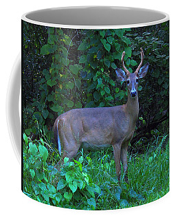 Whitetail Buck 029 Coffee Mug