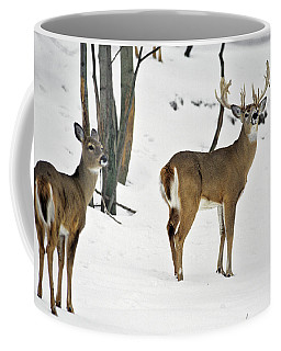 Whitetail Deer In Snow Odocoileus Coffee Mug