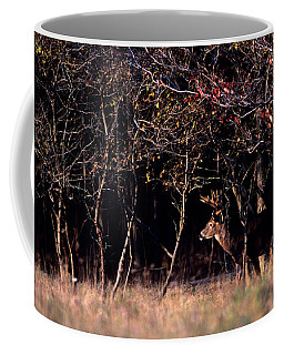 Whitetail Deer Odocoileus Virginianus Coffee Mug